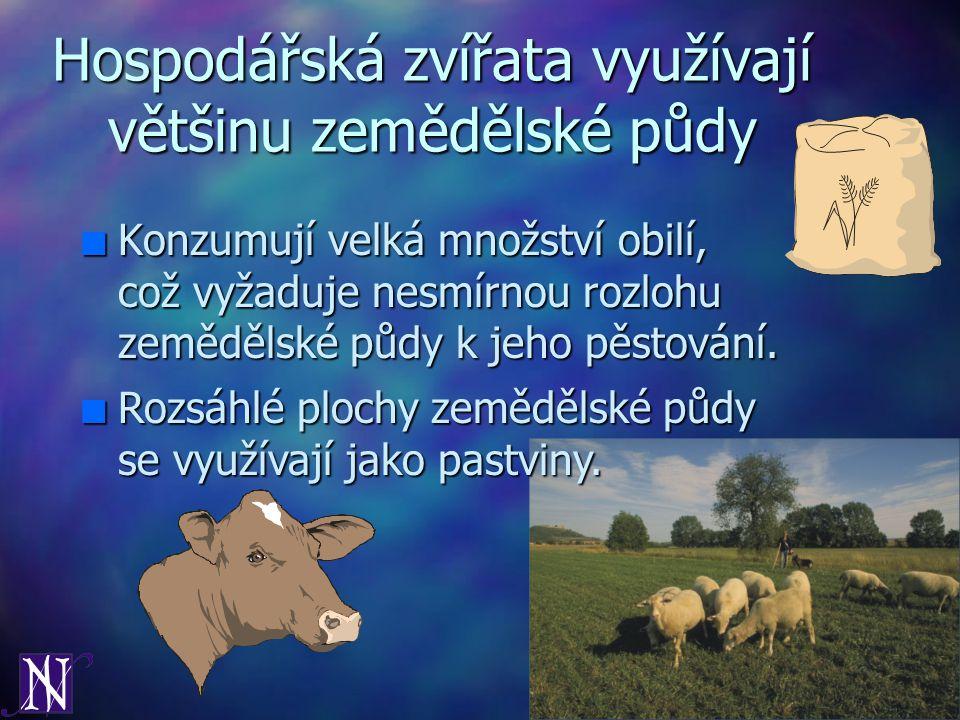 Hospodářská zvířata využívají většinu zemědělské půdy n Konzumují velká množství obilí, což vyžaduje nesmírnou rozlohu zemědělské půdy k jeho pěstován