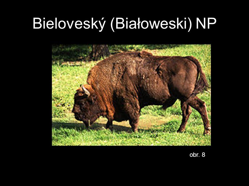 Bieloveský (Białoweski) NP obr. 8