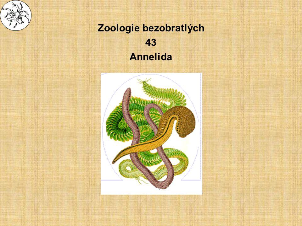 Oligochaeta - máloštětinatci systém Clitellata –Aeolosomatidae - olejnušky - přechodné formy od mnohoštětinatců –Haplotaxida (Tubificata) »Naididae - naidky - drobné, sladkovodní, bentické, lezoucí, průsvitné »Tubificidae - střední, sladko- i slanovodní, bentické zaryté v bahně, často hemohlobin –Lumbricida (Diplotesticulata) »Lumbricidae - skutečné žížaly, půdní (earthworms) »Enchytraeidae - roupice, menší půdní, bezbarvé –Lumbriculida »žížalice - sladkovodní, pestré –Hirudinea - pijavky (leeches) »Branchiobdella - potočnice račí »dravé i parazitické, sladkovodní, mořské i suchozemské