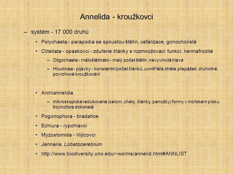 Annelida - kroužkovci –systém - 17 000 druhů Polychaeta - parapodia se spoustou štětin, cefalizace, gonochoristé Clitellata - opaskovci - zduřené člán