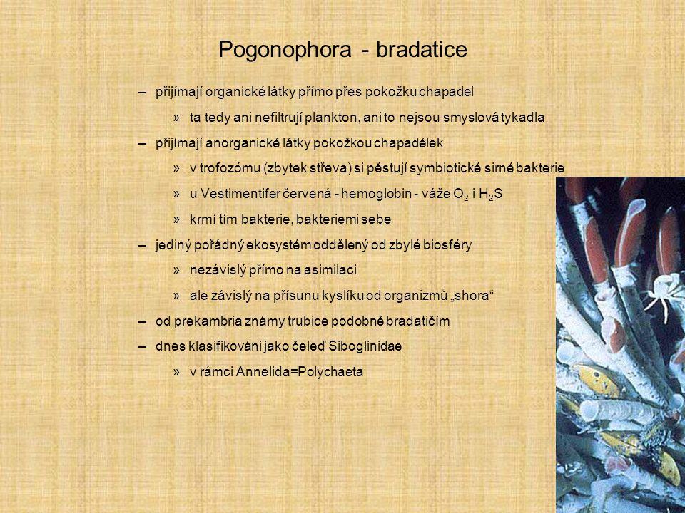 Pogonophora - bradatice –přijímají organické látky přímo přes pokožku chapadel »ta tedy ani nefiltrují plankton, ani to nejsou smyslová tykadla –přijí