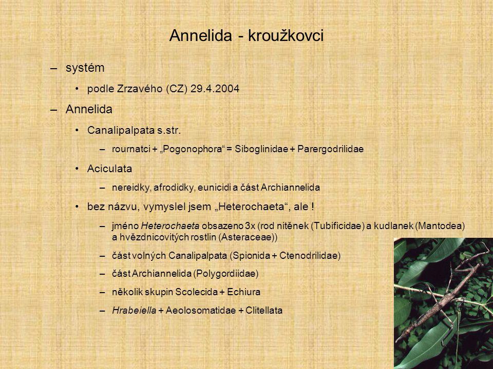 """Annelida - kroužkovci –systém podle Zrzavého (CZ) 29.4.2004 –Annelida Canalipalpata s.str. –rournatci + """"Pogonophora"""" = Siboglinidae + Parergodrilidae"""