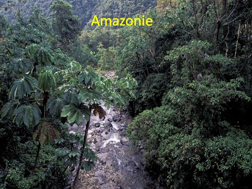 - Je to největší džungle světa - Rozkládá se na území Jižní Ameriky - Je velká 7 milionů km²