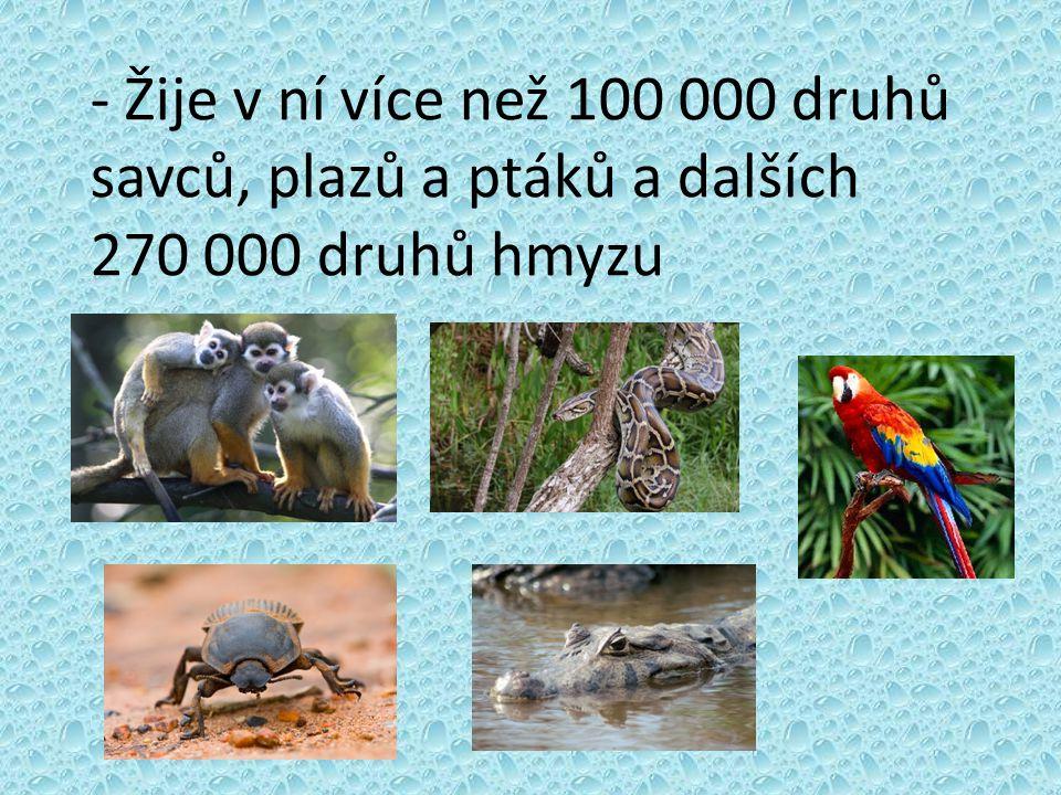 - Žije v ní více než 100 000 druhů savců, plazů a ptáků a dalších 270 000 druhů hmyzu