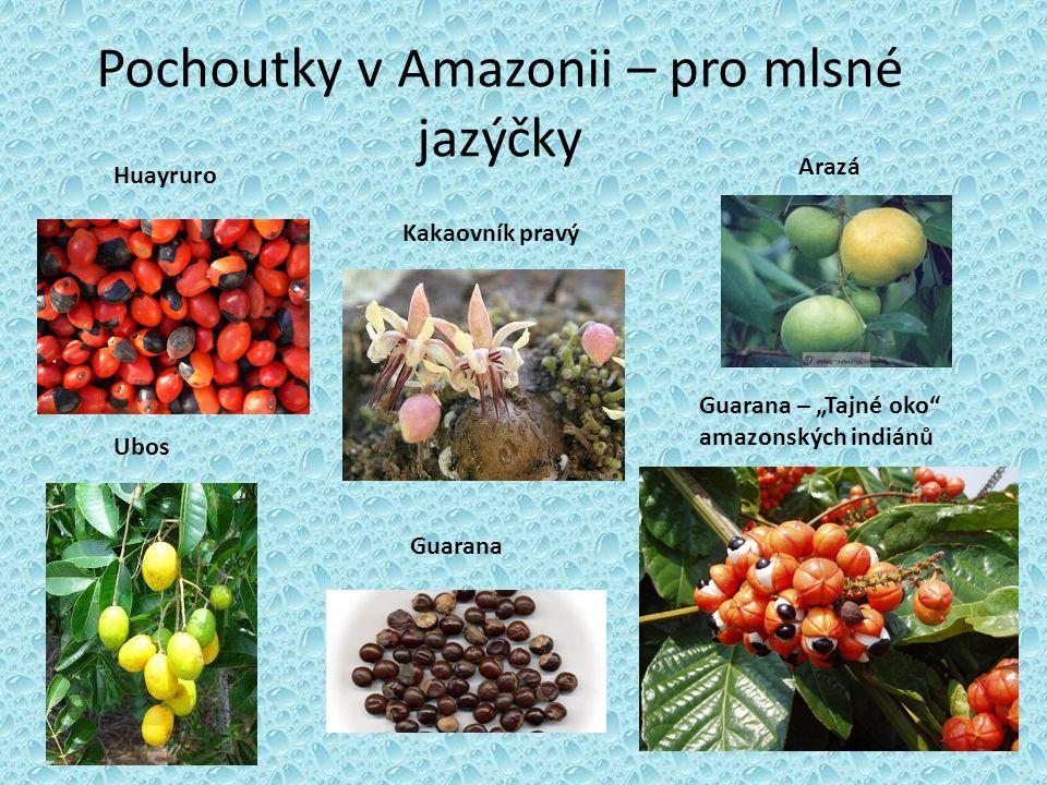 """Huayruro Ubos Pochoutky v Amazonii – pro mlsné jazýčky Guarana Guarana – """"Tajné oko"""" amazonských indiánů Arazá Kakaovník pravý"""
