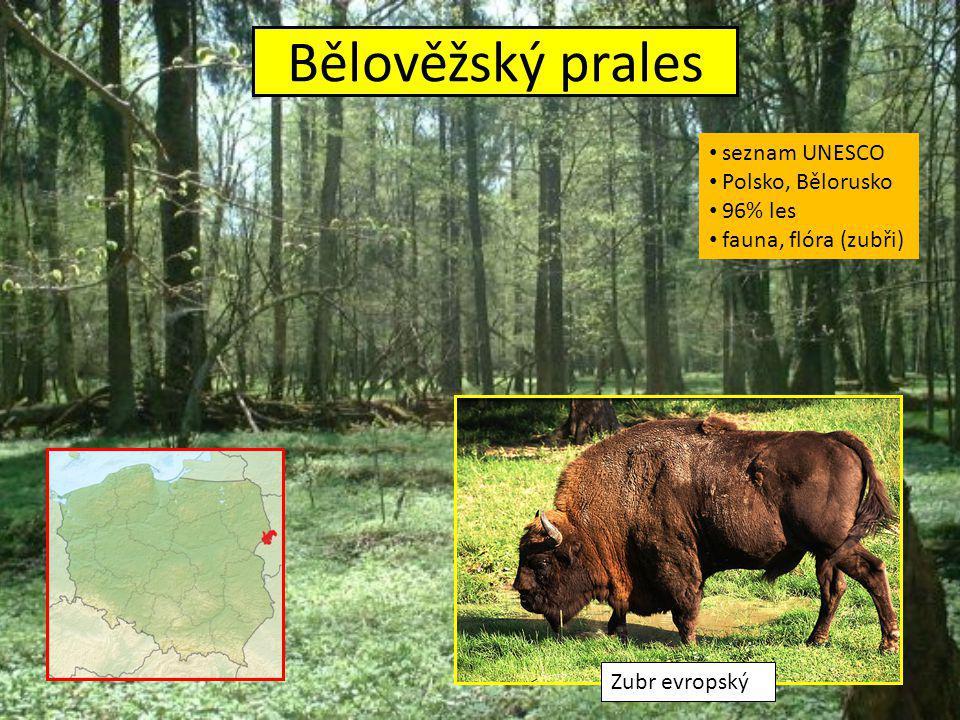 Bělověžský prales seznam UNESCO Polsko, Bělorusko 96% les fauna, flóra (zubři) Zubr evropský