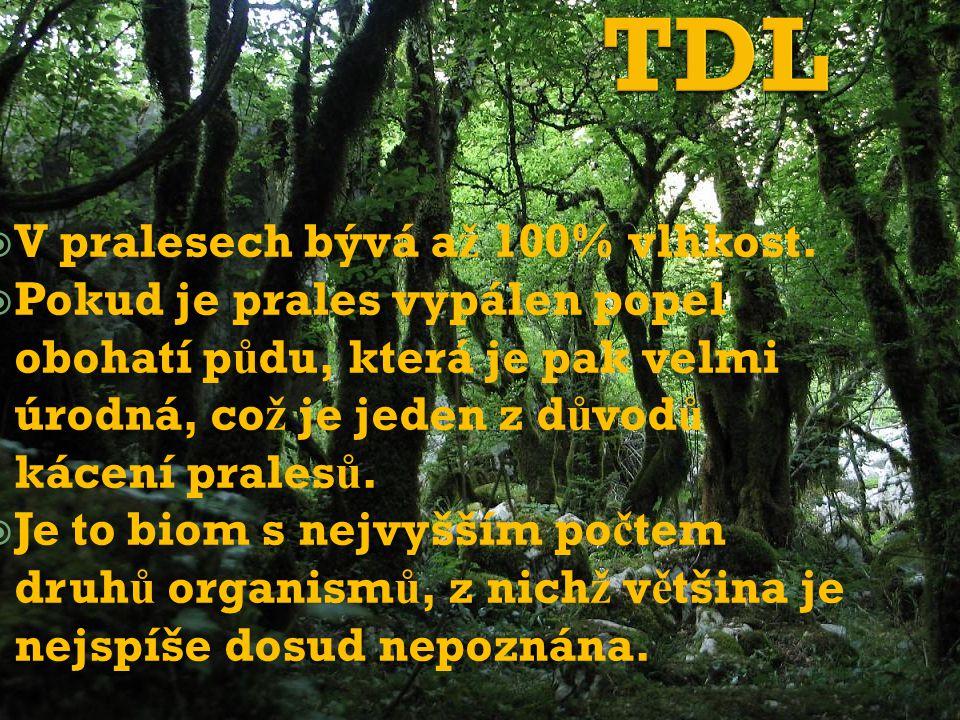  V pralesech bývá a ž 100% vlhkost.