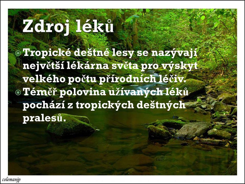  Tropické deštné lesy se nazývají nejv ě tší lékárna sv ě ta pro výskyt velkého po č tu p ř írodních lé č iv.
