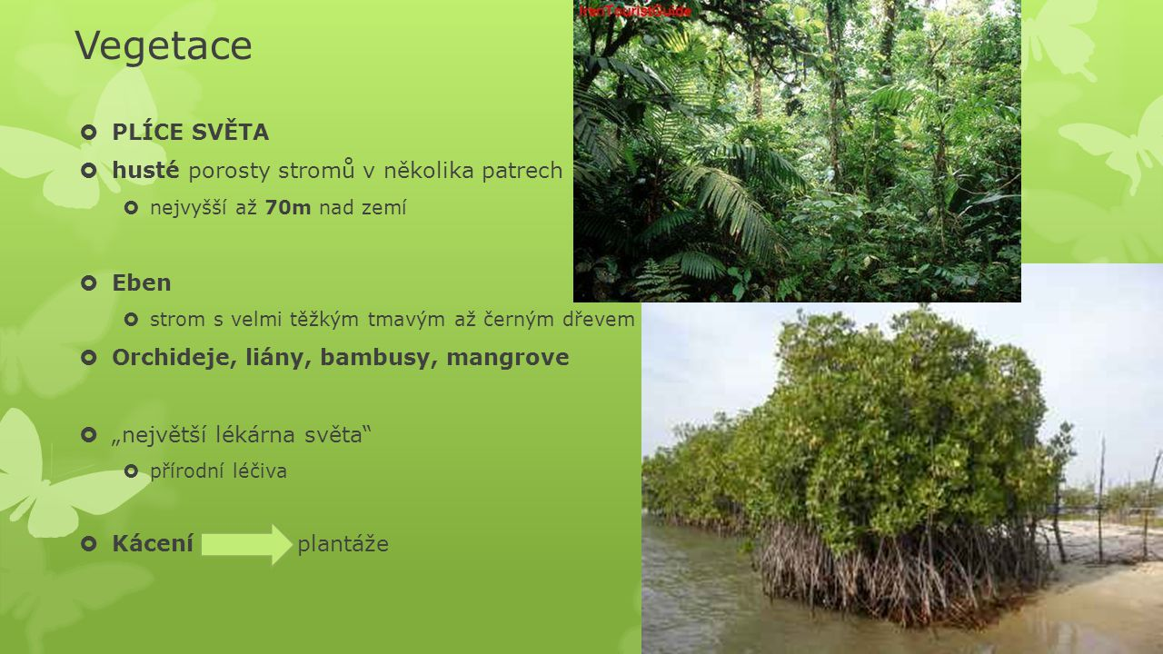 Vegetace  PLÍCE SVĚTA  husté porosty stromů v několika patrech  nejvyšší až 70m nad zemí  Eben  strom s velmi těžkým tmavým až černým dřevem  Or