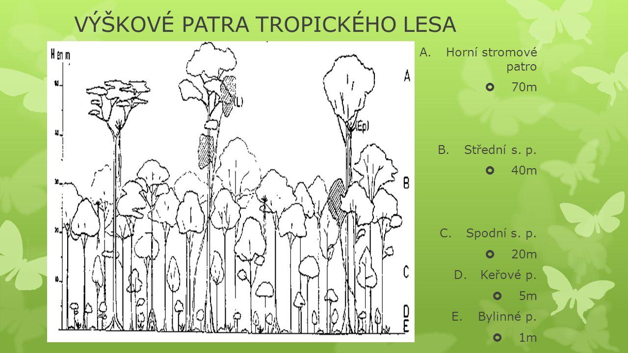 VÝŠKOVÉ PATRA TROPICKÉHO LESA A.Horní stromové patro  70m B.Střední s. p.  40m C.Spodní s. p.  20m D.Keřové p.  5m E.Bylinné p.  1m