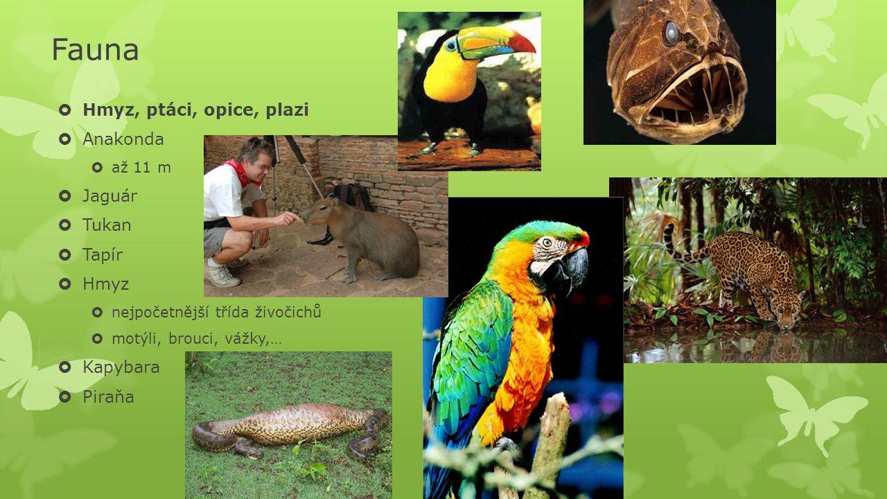 Fauna  Hmyz, ptáci, opice, plazi  Anakonda  až 11 m  Jaguár  Tukan  Tapír  Hmyz  nejpočetnější třída živočichů  motýli, brouci, vážky,…  Kap