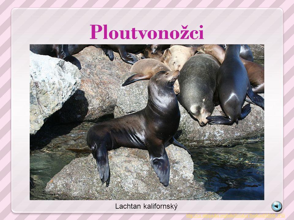 Zdroje Zdrojem obrázků je www.wikipedia.cz, přímý odkaz je uveden u každého obrázku, příp.