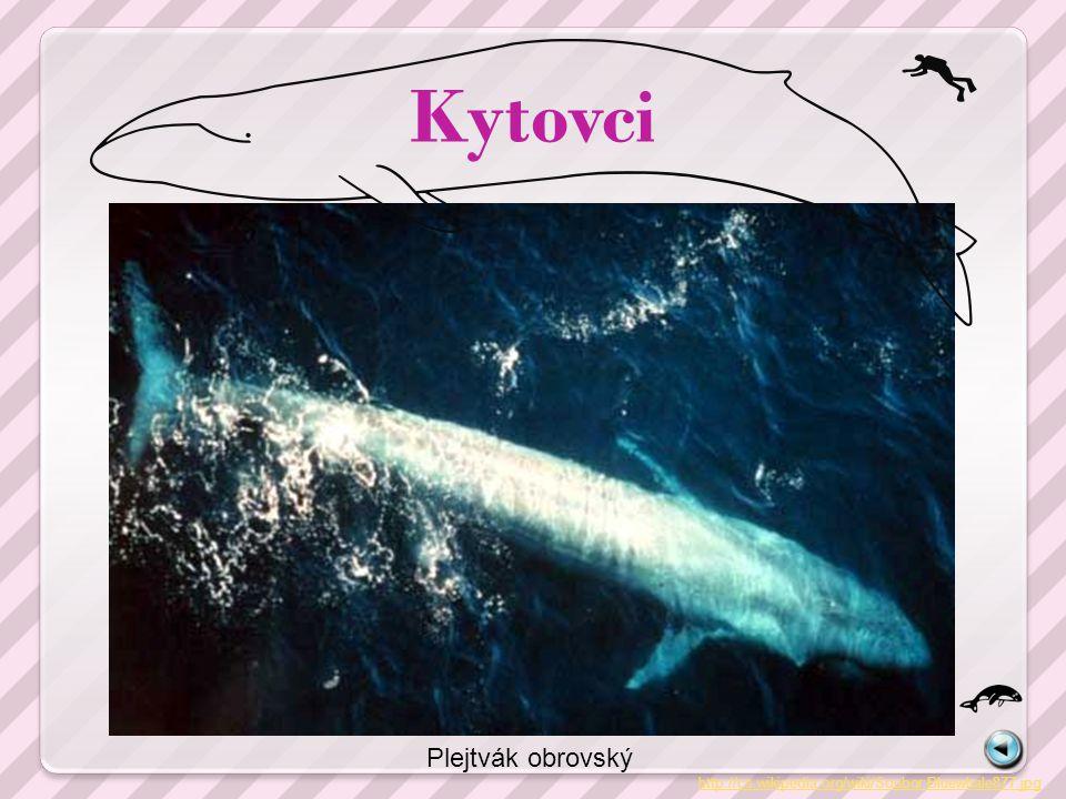 Kytovci http://cs.wikipedia.org/wiki/Soubor:Bottlenose_Dolphin_KSC04pd0178.jpg Delfín skákavý a delfín obecný http://cs.wikipedia.org/wiki/Soubor:Common_dolphin.jpg