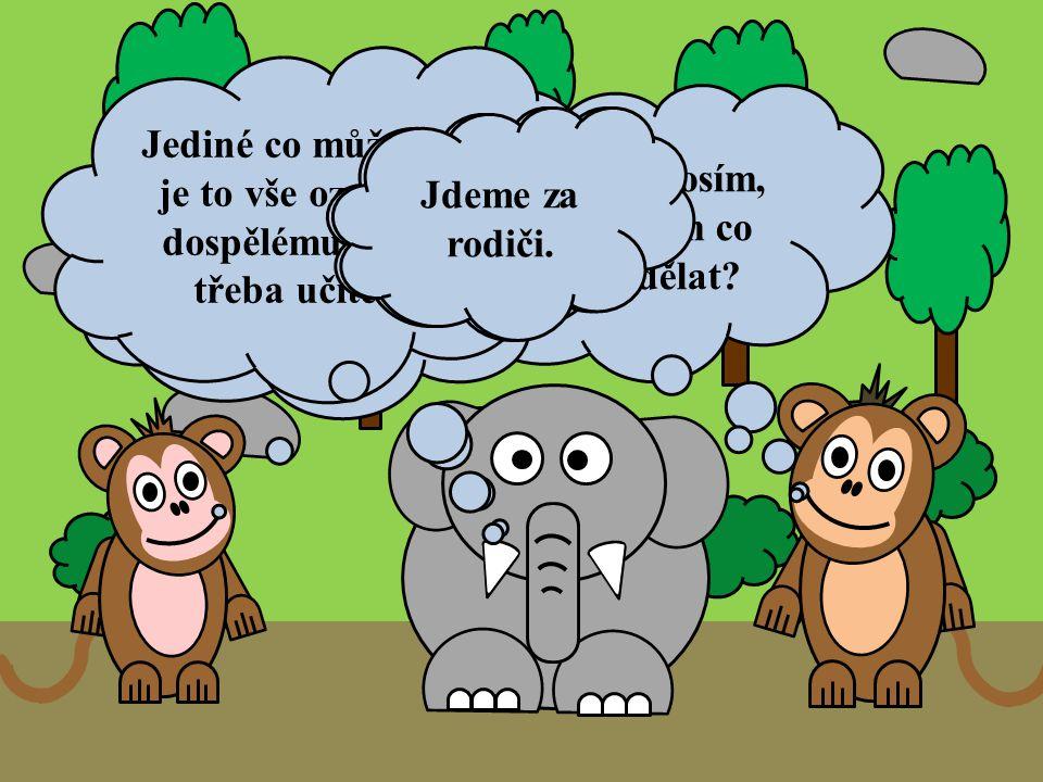 Sloníku prosím, poraď nám co máme dělat? Jelikož jsme ještě malý, tak nic sami udělat nemůže. Jediné co můžeme, je to vše oznámit dospělému nebo třeba