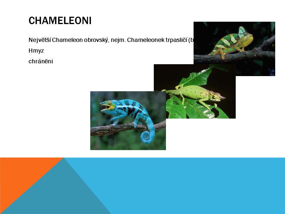 CHAMELEONI Největší Chameleon obrovský, nejm. Chameleonek trpasličí (brookesia) Hmyz chráněni