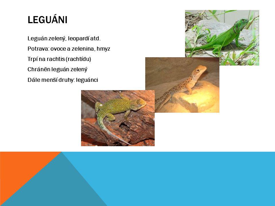LEGUÁNI Leguán zelený, leopardí atd. Potrava: ovoce a zelenina, hmyz Trpí na rachtis (rachtídu) Chráněn leguán zelený Dále menší druhy: leguánci