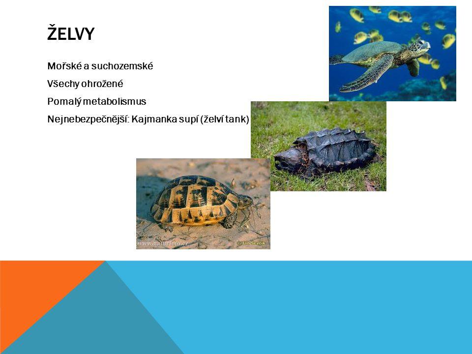 ŽELVY Mořské a suchozemské Všechy ohrožené Pomalý metabolismus Nejnebezpečnější: Kajmanka supí (želví tank)