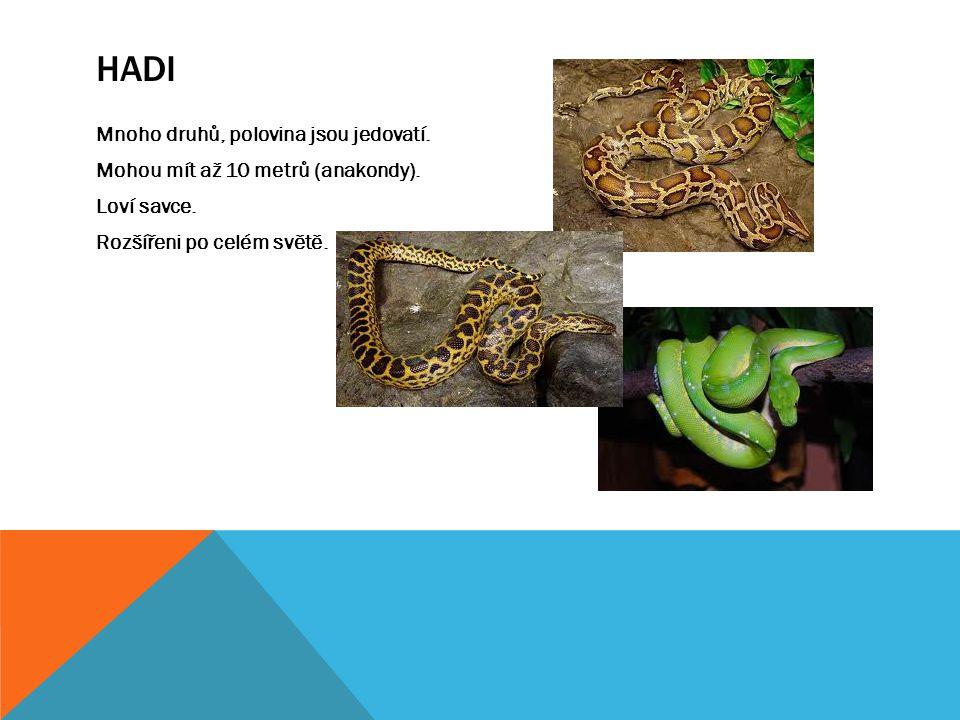 HADI Mnoho druhů, polovina jsou jedovatí. Mohou mít až 10 metrů (anakondy). Loví savce. Rozšířeni po celém světě.