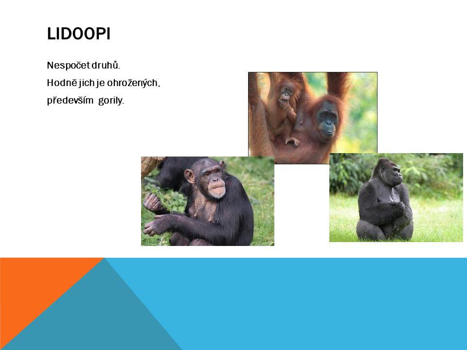 LIDOOPI Nespočet druhů. Hodně jich je ohrožených, především gorily.