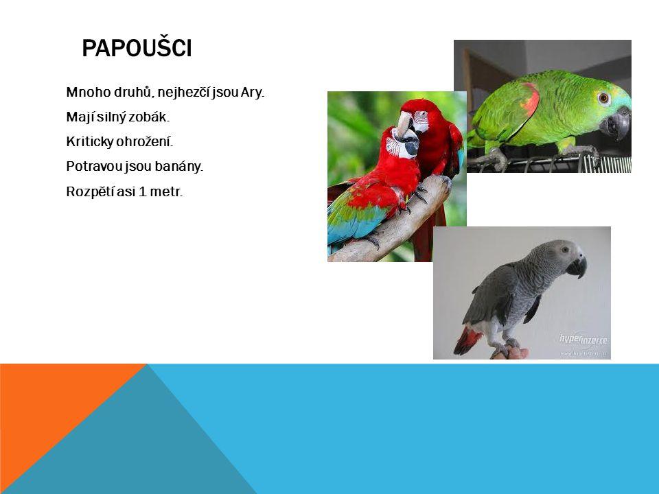Mnoho druhů, nejhezčí jsou Ary. Mají silný zobák. Kriticky ohrožení. Potravou jsou banány. Rozpětí asi 1 metr. PAPOUŠCI