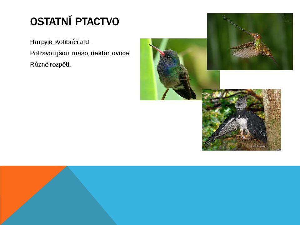 OSTATNÍ PTACTVO Harpyje, Kolibříci atd. Potravou jsou: maso, nektar, ovoce. Různé rozpětí.
