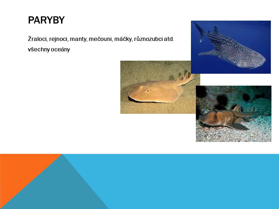 PARYBY Žraloci, rejnoci, manty, mečouni, máčky, různozubci atd. všechny oceány