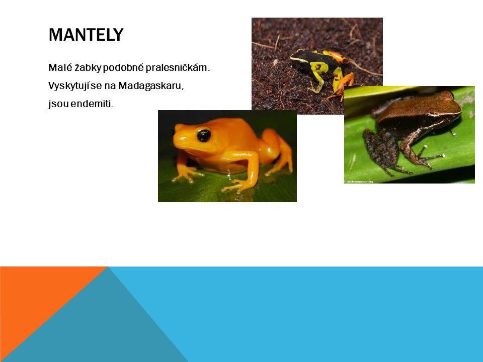 MANTELY Malé žabky podobné pralesničkám. Vyskytují se na Madagaskaru, jsou endemiti.