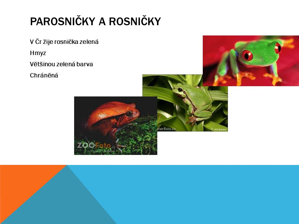 PAROSNIČKY A ROSNIČKY V Čr žije rosnička zelená Hmyz Většinou zelená barva Chráněná