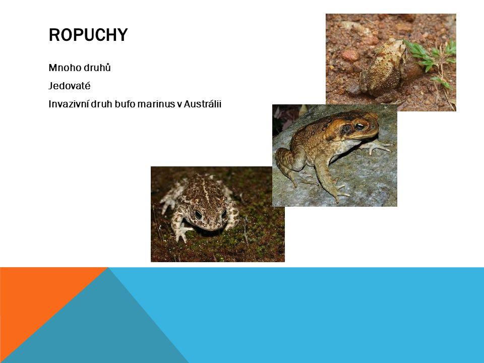 ROPUCHY Mnoho druhů Jedovaté Invazivní druh bufo marinus v Austrálii