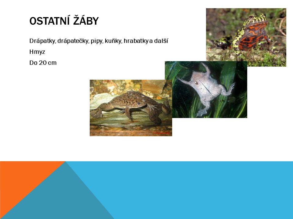 OSTATNÍ ŽÁBY Drápatky, drápatečky, pipy, kuňky, hrabatky a další Hmyz Do 20 cm