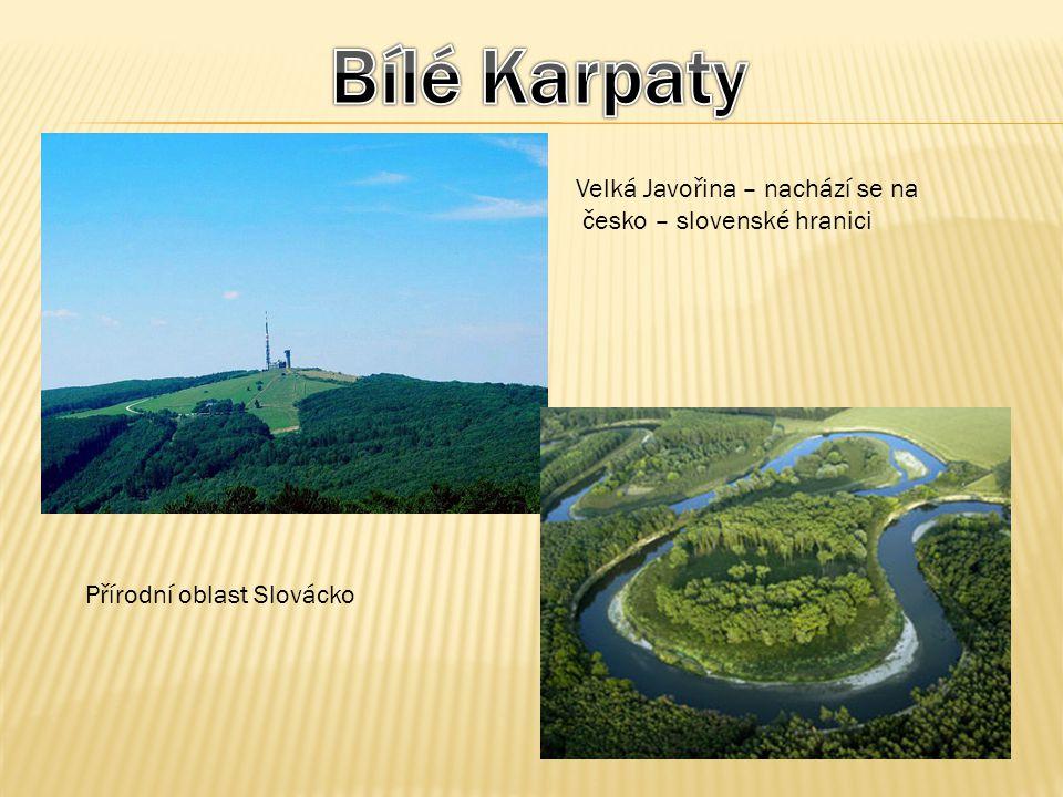 Velká Javořina – nachází se na česko – slovenské hranici Přírodní oblast Slovácko