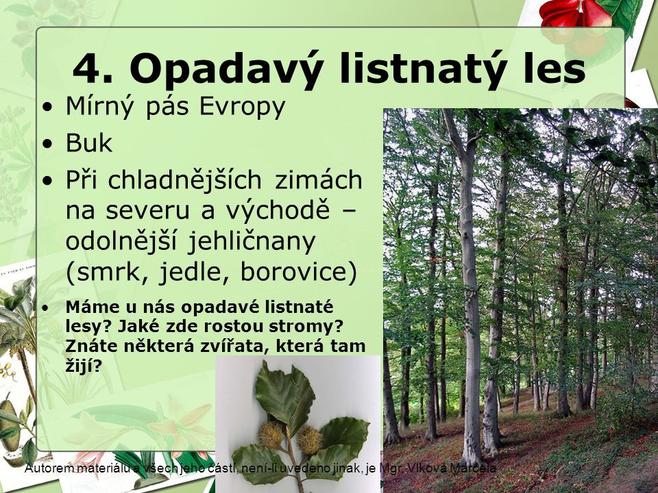 4. Opadavý listnatý les Mírný pás Evropy Buk Při chladnějších zimách na severu a východě – odolnější jehličnany (smrk, jedle, borovice) Máme u nás opa