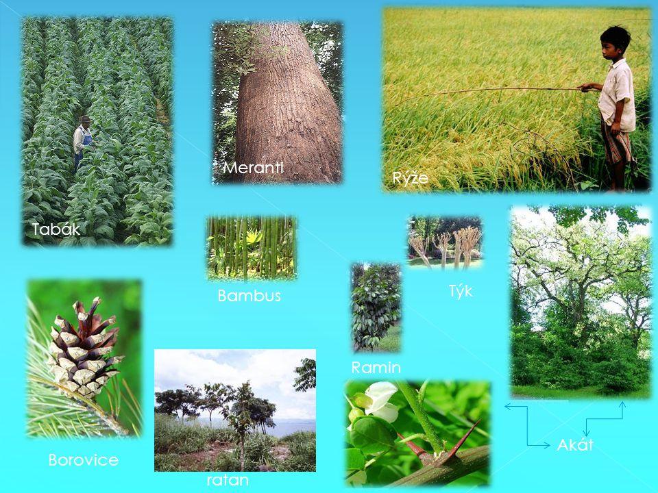 Tabák Rýže Meranti Ramin Akát Týk Borovice ratan Bambus