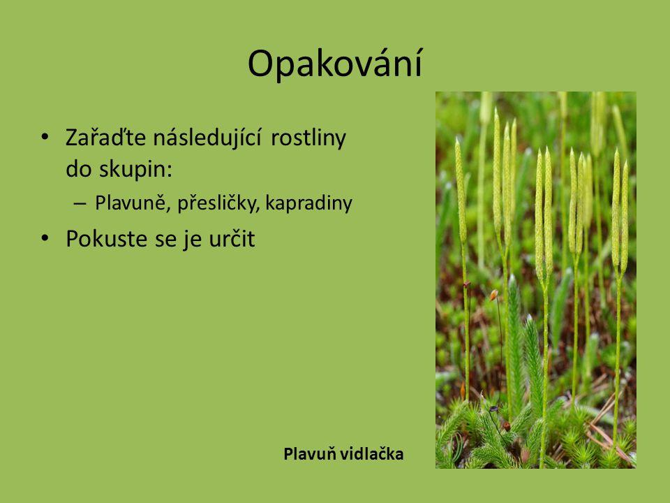 Opakování Zařaďte následující rostliny do skupin: – Plavuně, přesličky, kapradiny Pokuste se je určit Plavuň vidlačka