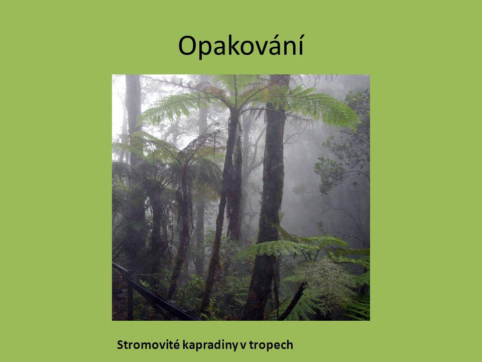 Opakování Stromovité kapradiny v tropech