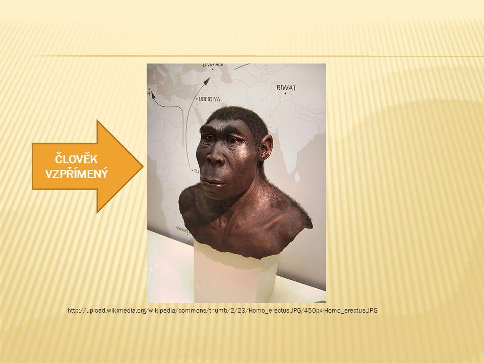 http://upload.wikimedia.org/wikipedia/commons/thumb/2/23/Homo_erectus.JPG/450px-Homo_erectus.JPG ČLOVĚK VZPŘÍMENÝ