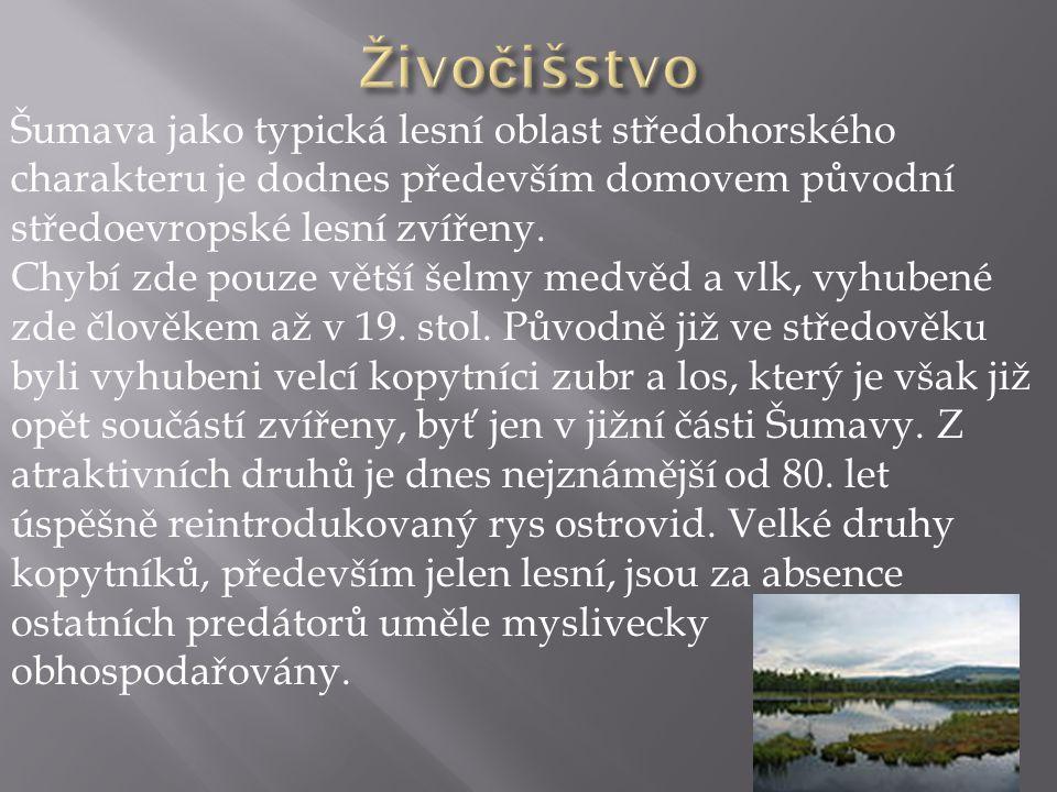 Šumava jako typická lesní oblast středohorského charakteru je dodnes především domovem původní středoevropské lesní zvířeny. Chybí zde pouze větší šel