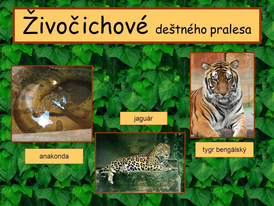 Tropický pás Živočichové deštného pralesa anakonda tygr bengálský jaguár