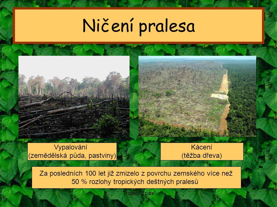 Tropický pás Ničení pralesa Za posledních 100 let již zmizelo z povrchu zemského více než 50 % rozlohy tropických deštných pralesů Vypalování (zeměděl