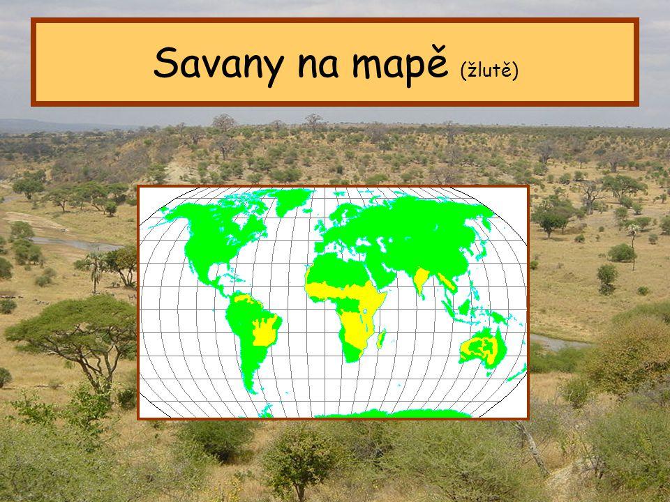 Tropický pás Savany na mapě (žlutě)