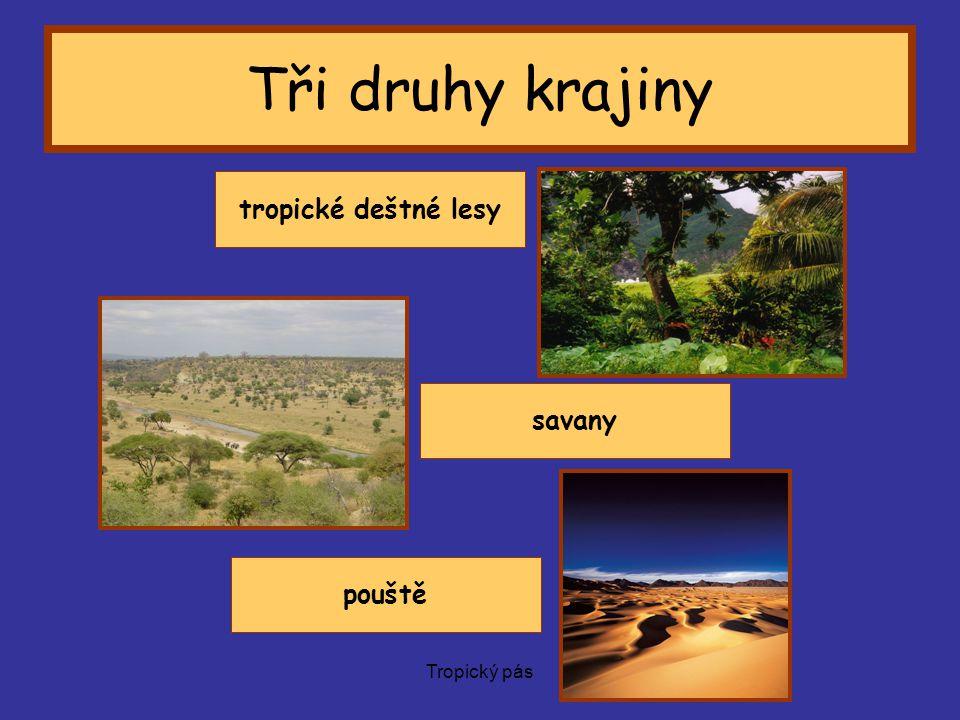 Tropický pás Savany Plochy pokryté travinami, místy keři a stromy Rozkládají se od tropických deštných lesů směrem k severu a k jihu.