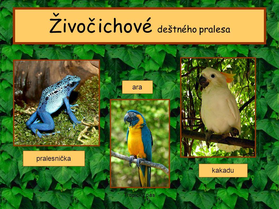Tropický pás Živočichové deštného pralesa ara kakadu pralesnička