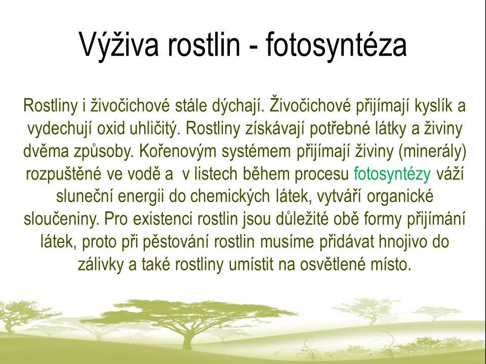 Fotosyntéza Fotosyntéza je název složitého chemického procesu probíhajícího v zelených částech rostlin.