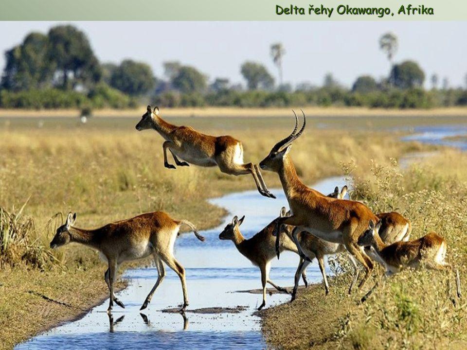 Delta řehy Okawango, Afrika