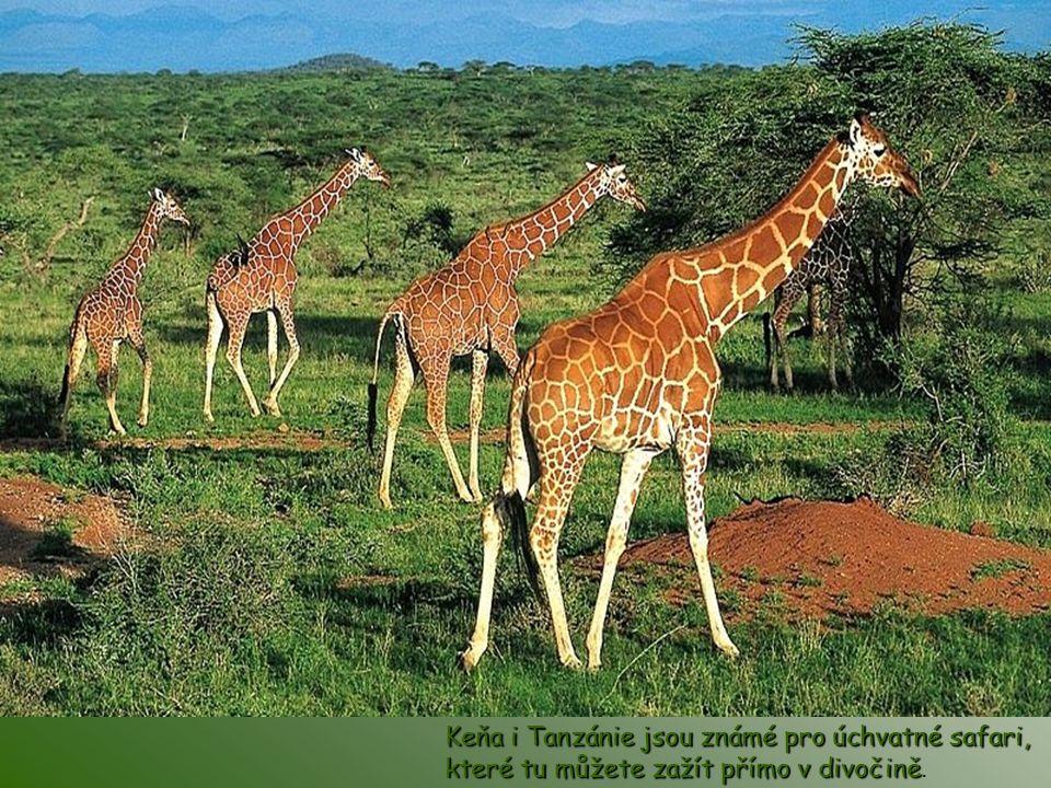 Keňa i Tanzánie jsou známé pro úchvatné safari, které tu můžete zažít přímo v divočině.