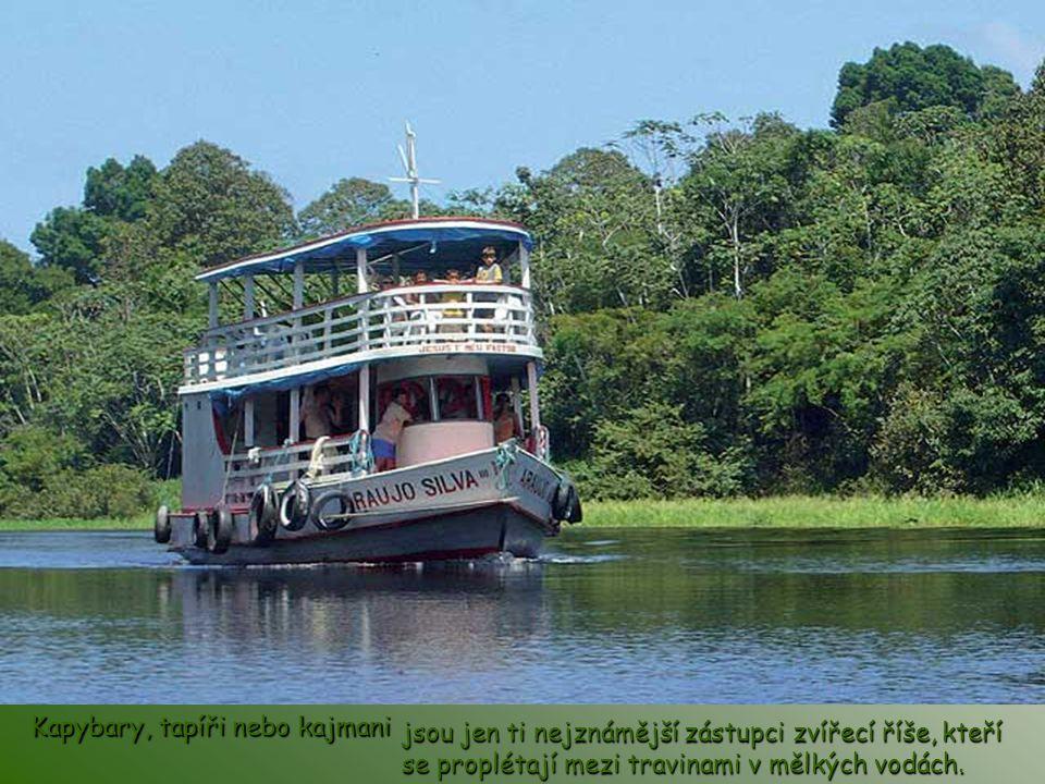 Největší mokřady světa v brazilském pralese Pantanal v jižní Brazílii mají asi 200 tisíc km² a jde o jedno z nejlepších míst pro pozorování pravé divo