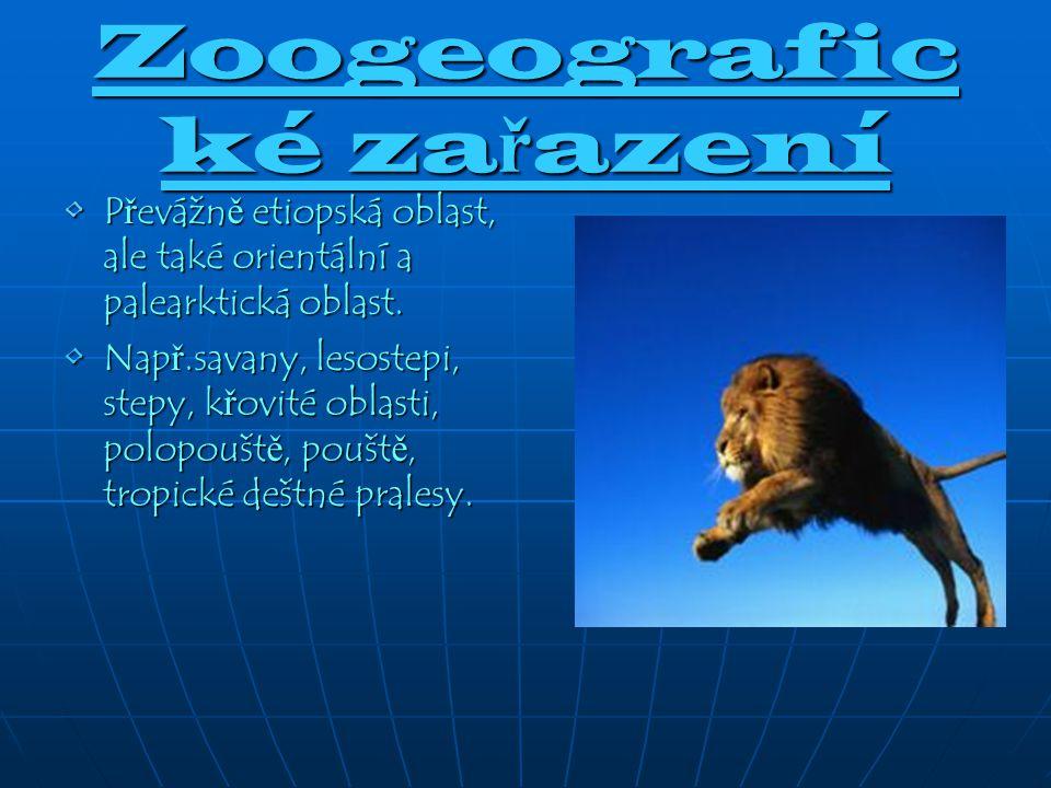 Zoogeografic ké za ř azení P ř evážn ě etiopská oblast, ale také orientální a palearktická oblast.