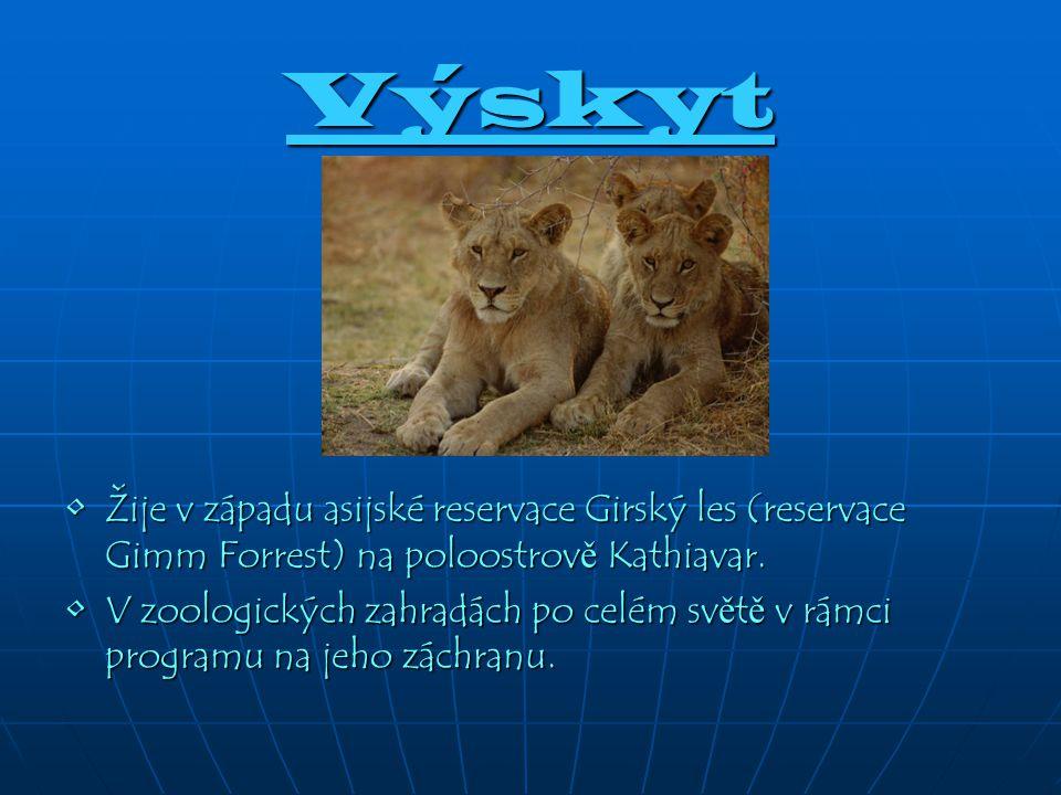 Výskyt Žije v západu asijské reservace Girský les (reservace Gimm Forrest) na poloostrov ě Kathiavar.