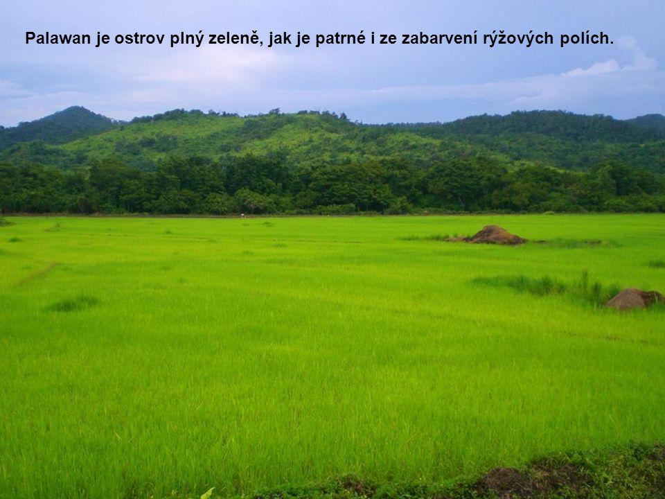Palawan je ostrov plný zeleně, jak je patrné i ze zabarvení rýžových polích.