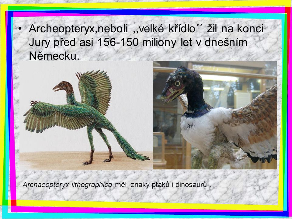 Archeopteryx,neboli,,velké křídlo´´ žil na konci Jury před asi 156-150 miliony let v dnešním Německu. Archaeopteryx lithographica měl znaky ptáků i di